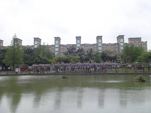0410大湖公園紫藤 (1).JPG