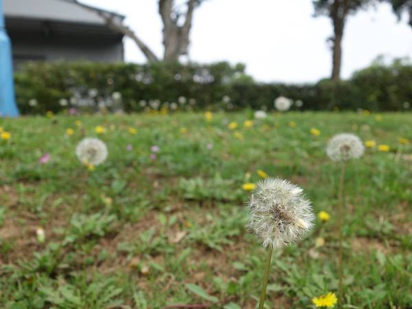 0410大湖公園紫藤 (3).JPG