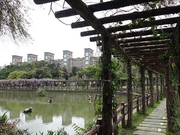 0410大湖公園紫藤 (4).JPG