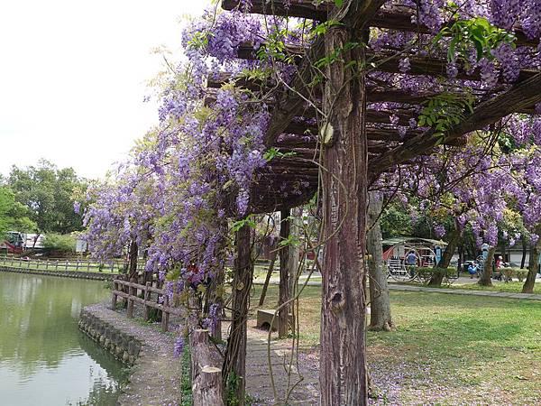 0410大湖公園紫藤 (9).JPG