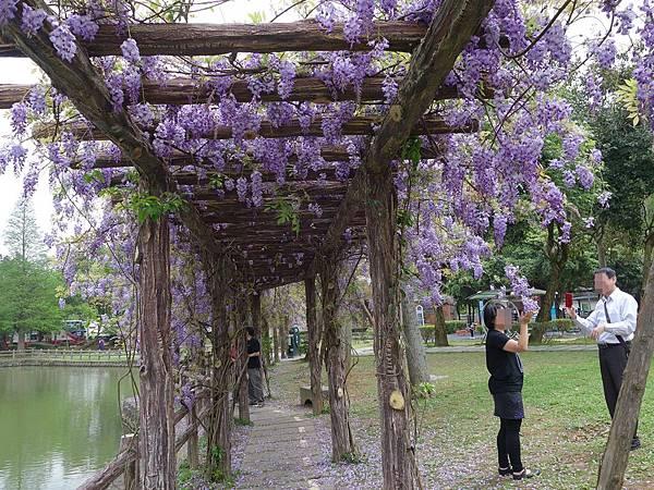 0410大湖公園紫藤 (8).JPG