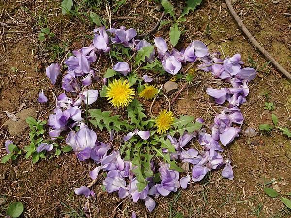 0410大湖公園紫藤 (10).JPG