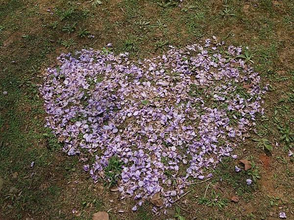 0410大湖公園紫藤 (11).JPG