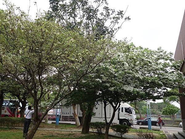 0410大湖公園紫藤 (28).JPG