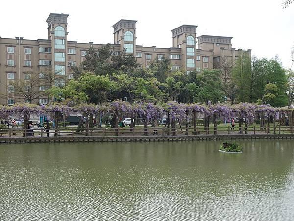 0410大湖公園紫藤 (33).JPG