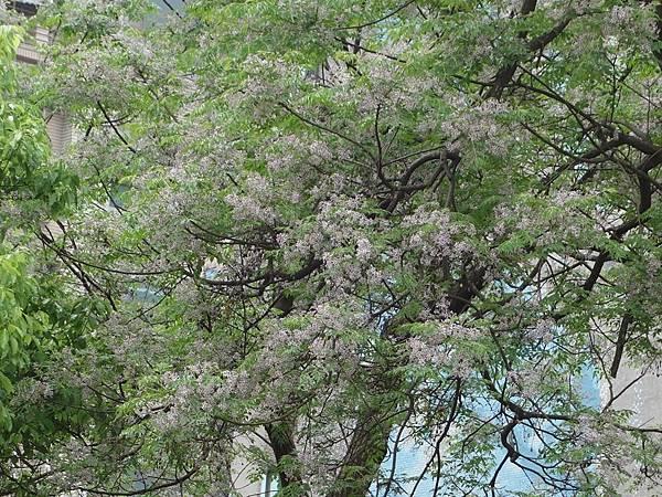 0410大湖公園紫藤 (38).JPG