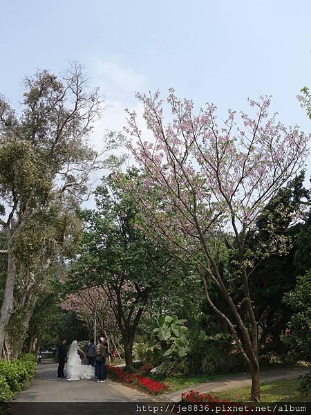 0408花卉試驗中心 (44).JPG