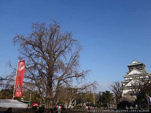 0125大阪城 (16).JPG