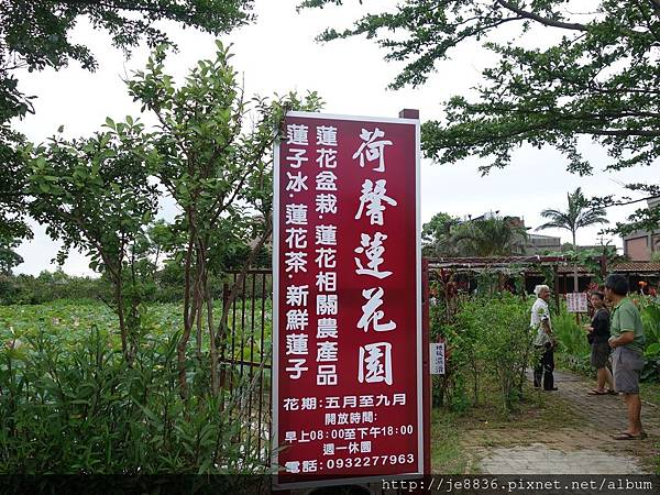 0612荷馨蓮園 (12).JPG