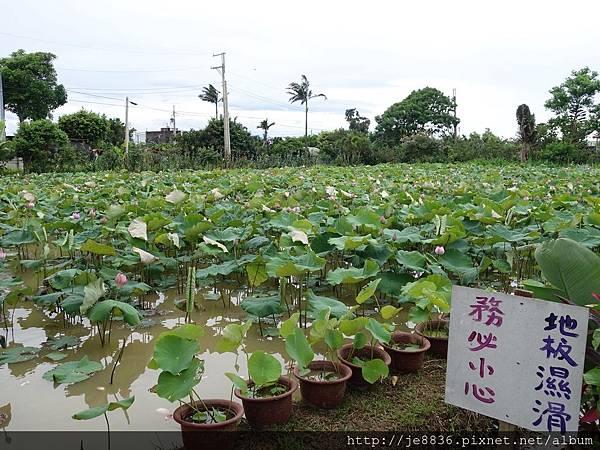 0612荷馨蓮園 (13).JPG