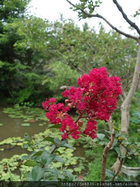 0612荷馨蓮園 (21).JPG
