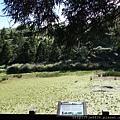 0814夢幻湖 (11).JPG