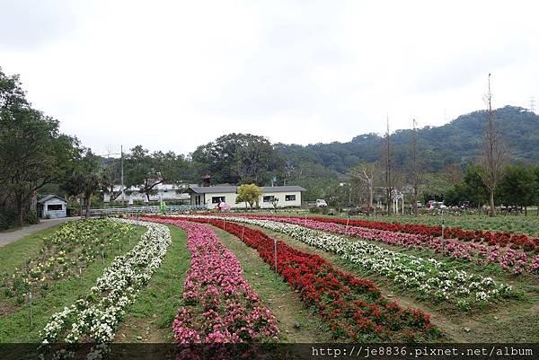 0112富田農場 (7).JPG