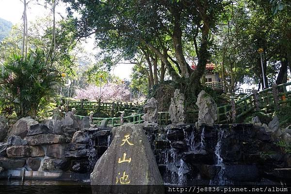 0215天元宮三色櫻 (15).JPG