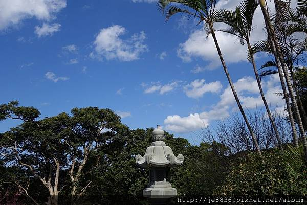 0215天元宮三色櫻 (26).JPG