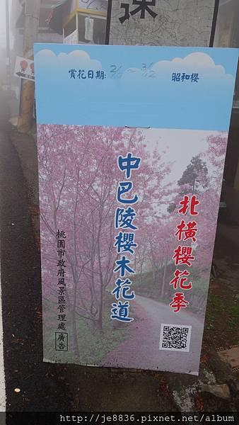 0306中巴陵昭和櫻 (31).JPG
