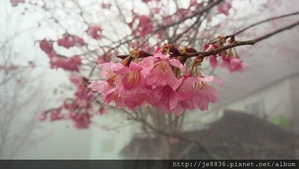 0306中巴陵手機版 (7).jpg