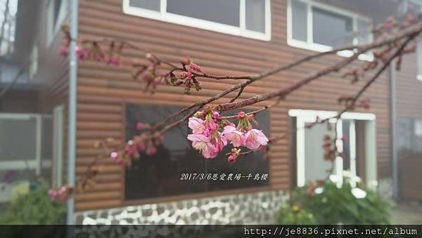 0306恩愛農場手機版 (13).jpg