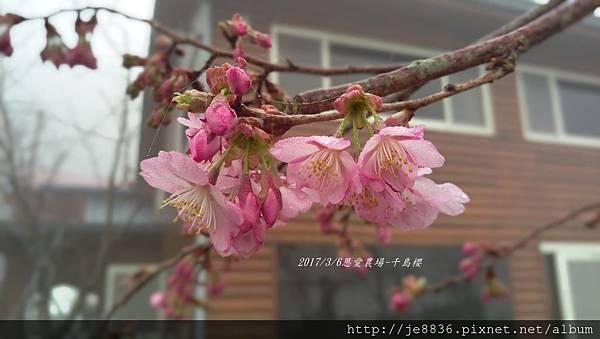 0306恩愛農場手機版 (14).jpg