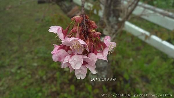 0306恩愛農場手機版 (15).jpg