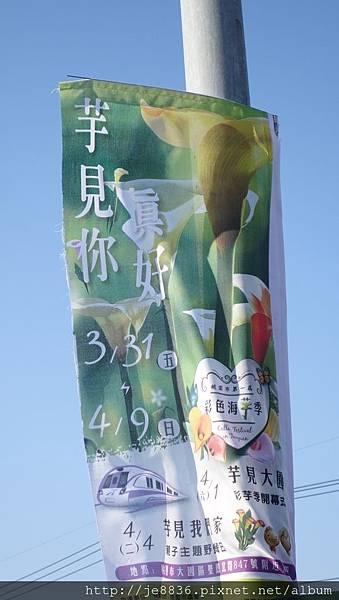 0403桃園彩色海芋節 (71).JPG