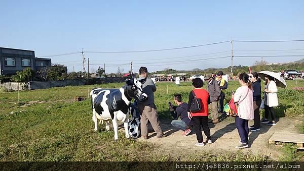 0403桃園彩色海芋節 (66).JPG