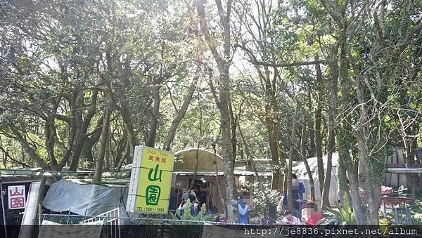 2017陽明山海芋季 (29).JPG