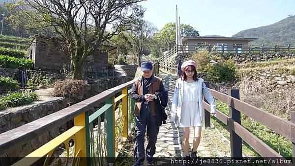 2017陽明山海芋季 (44).JPG