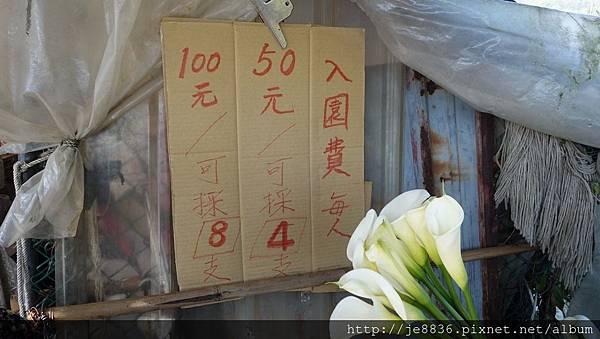 2017陽明山海芋季 (74).JPG