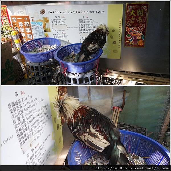 2017陽明山海芋季 (81).JPG