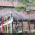 0406崇林紫藤花廊 (6).JPG