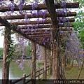 0407大湖紫藤花廊 (23).JPG