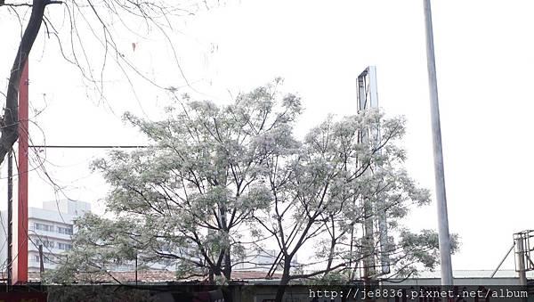 0407大湖紫藤花廊 (29).JPG