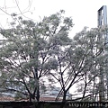 0407大湖紫藤花廊 (31).JPG