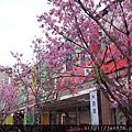 0407大湖紫藤花廊 (33).JPG
