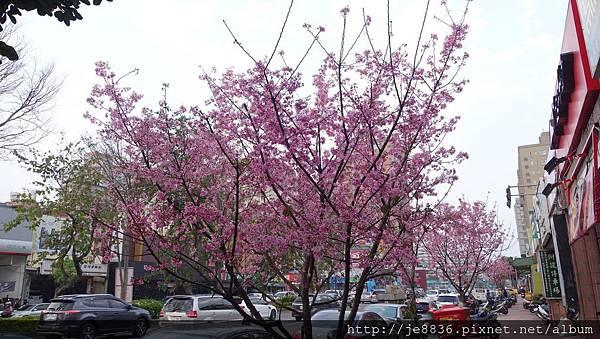 0407大湖紫藤花廊 (34).JPG