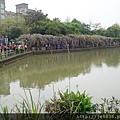 0415大湖公園紫藤爆開 (6).JPG