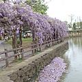0410大湖紫藤 (5).JPG