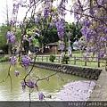 0410大湖紫藤 (18).JPG