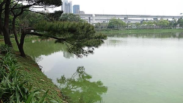 0415長庚湖隨手拍 (13).JPG