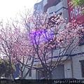 0403竹林寺櫻花 (38).JPG