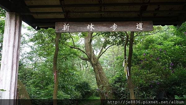 0504新林步道賞桐 (2).JPG