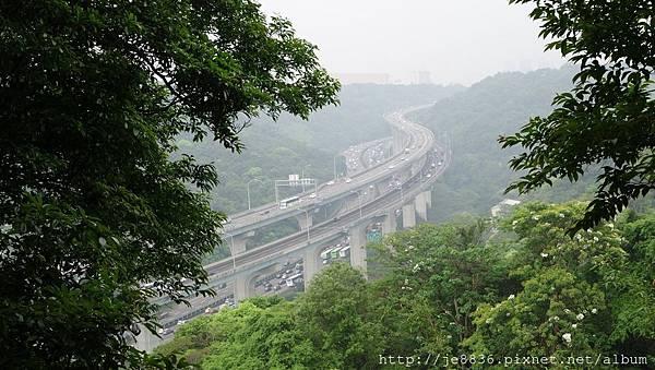 0504新林步道賞桐 (28).JPG