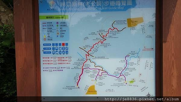 0504新林步道賞桐 (81).JPG