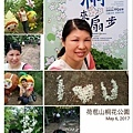 0506荷苞山桐花 (19).jpg