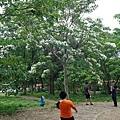 0506荷苞山桐花 (37).jpg