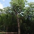 0512泰安竹林12.jpg