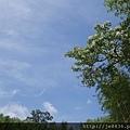 0512泰安竹林43.jpg