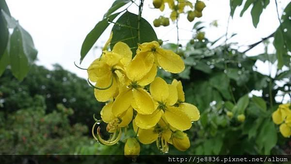 0615蜜蜂故事館10.jpg