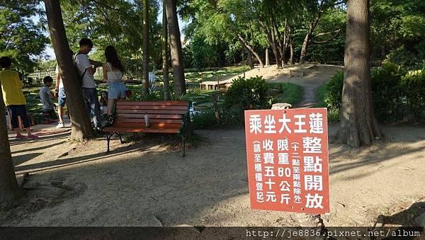0814蓮荷園~大王蓮季節 (16).jpg